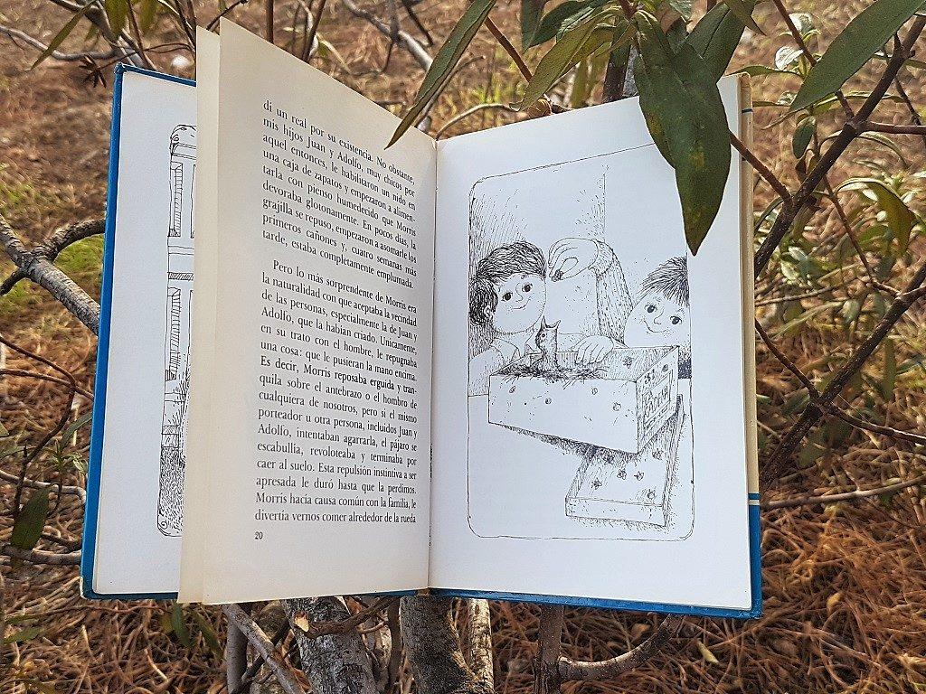 Tres pájaros de cuenta Miguel Delibes Libros para niños