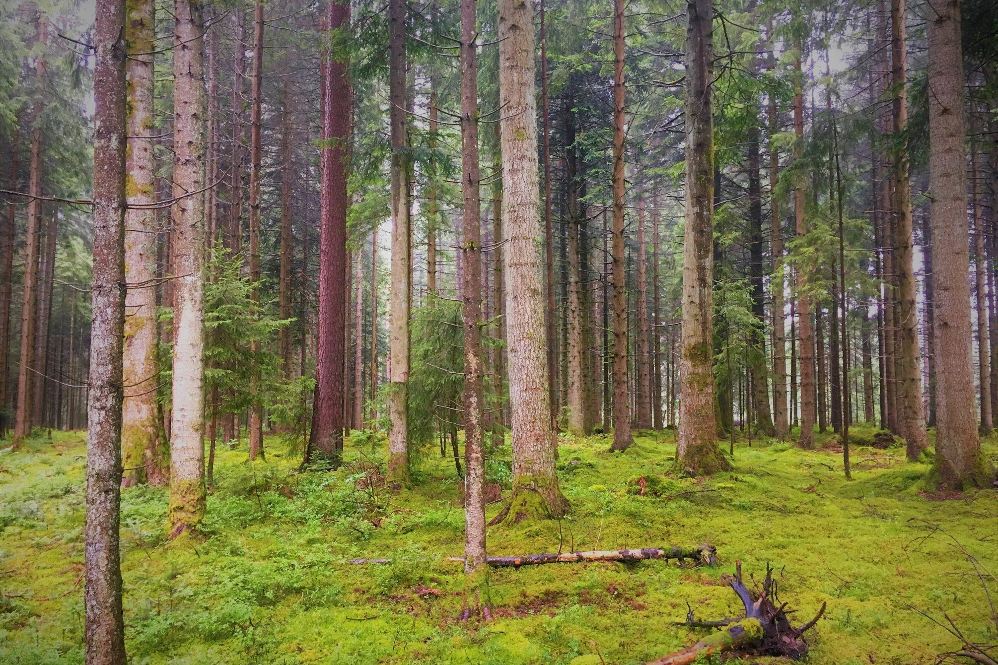 Bosque de la Selva Negra - fotografía : Telar de Libros