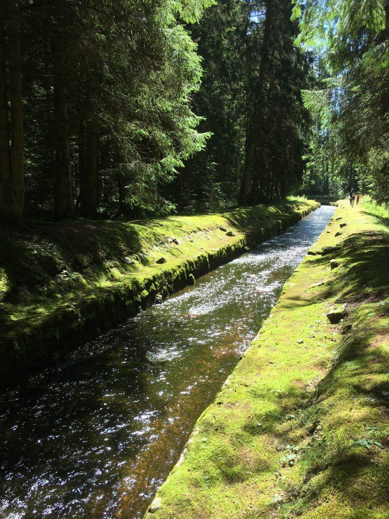 arroyo que lleva las aguas del lago Windgfällweiher al Schluchsee - Fotografía: Telar de Libros